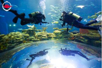 Scuba Diving in Ocean Park's Grand Aquarium