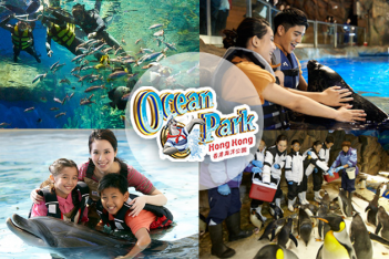 Dolphin, Penguin or Seal Encounter at Ocean Park