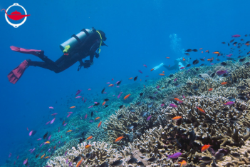 Discover Scuba Diving for Two