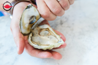Oyster Shucking Dinner Party for 10