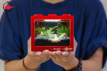 Mini Ecosystem Aquarium Workshop For Two